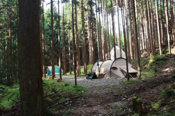 芦見谷芸術の森の涼しい川沿い林間サイト