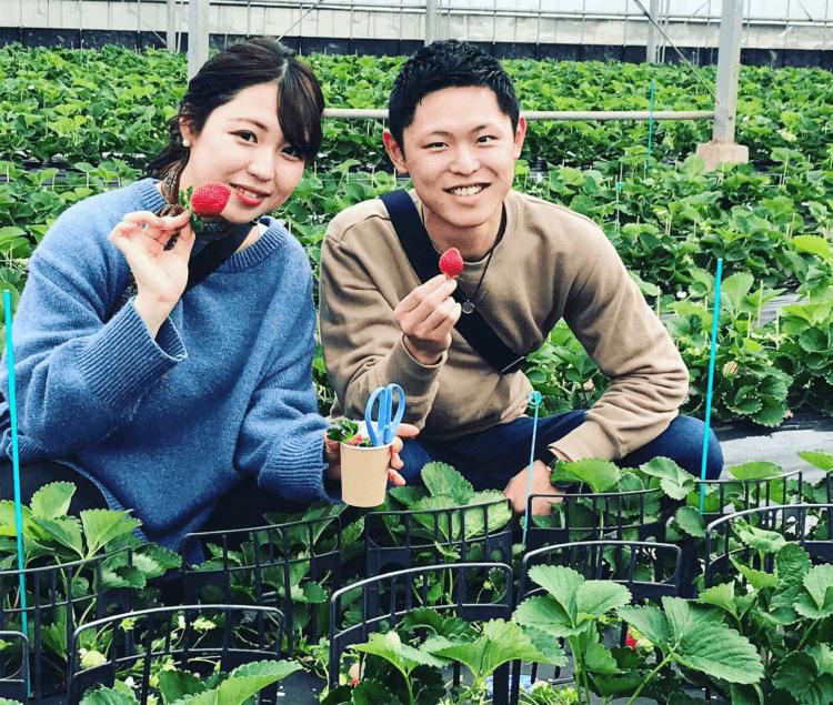 平井観光農園のいちご狩り・トマト狩り