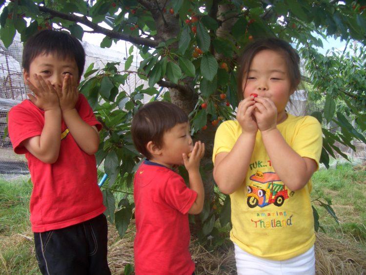 いいじまフルーツ観光園でサクランボ・桃狩りができる時期はいつですか?