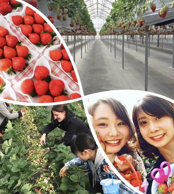 平井観光農園のイベントについて