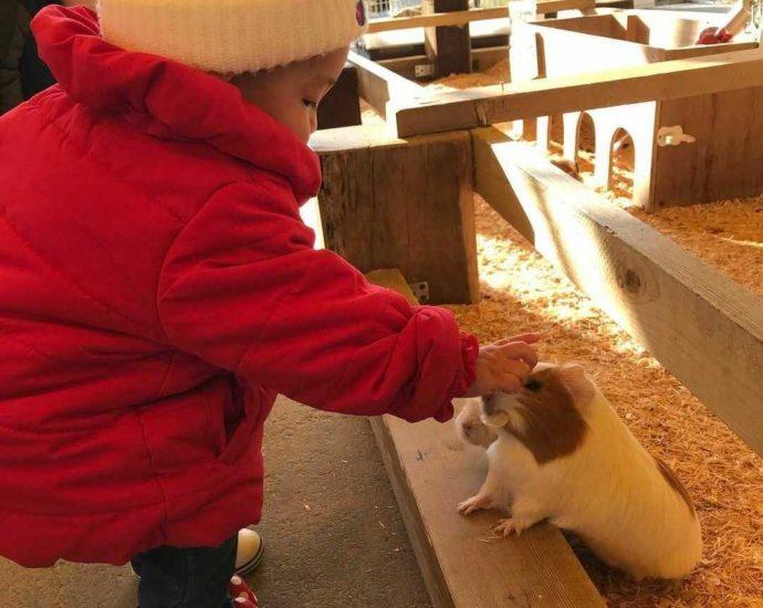 愛知県の「愛知牧場」で動物とふれあう子ども