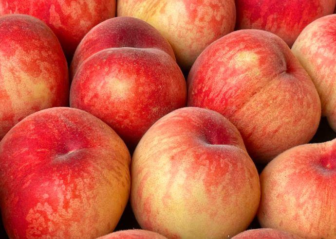 観光農園あかぎおろしで収穫できる桃