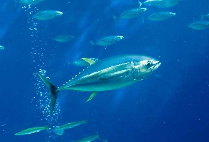 「環境水族館アクアマリンふくしま」のコーナー「潮目の海」