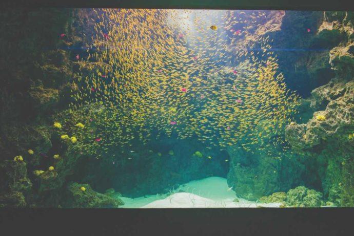 「環境水族館アクアマリンふくしま」のサンゴ礁の海