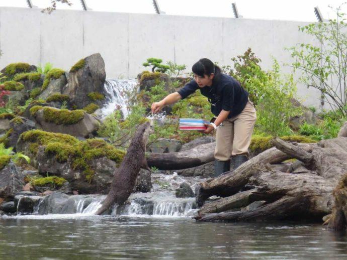 「環境水族館アクアマリンふくしま」のフィーディングタイム