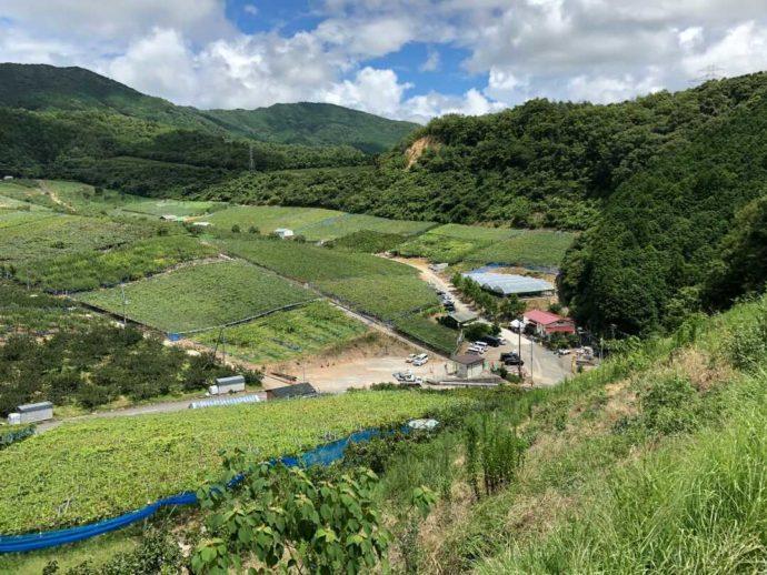 上から見た有田巨峰村 森園