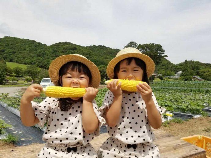 淡路ファームパーク イングランドの丘で収穫したトウモロコシにかぶりつく女の子