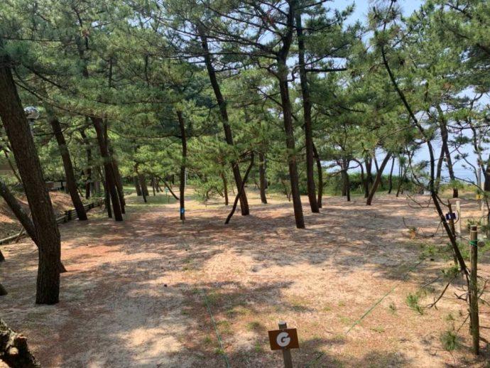 兵庫県豊岡市にある弁天浜キャンプ場の松林区画サイト