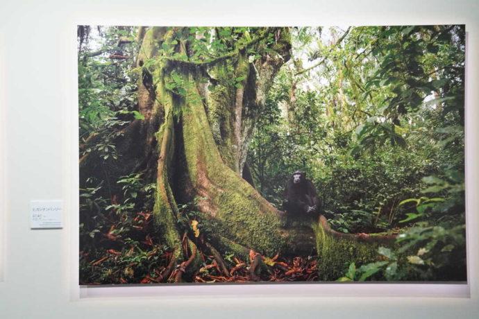 美幌博物館に展示されている動物写真家・前川貴行の作品