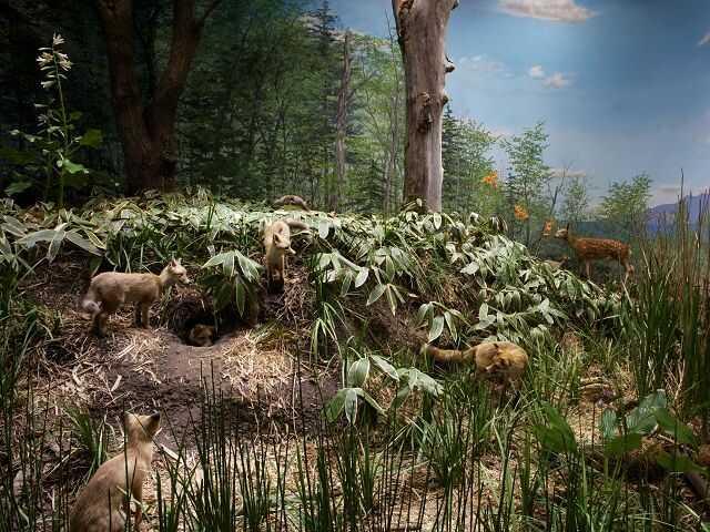 美幌博物館ではオホーツクの初夏を再現したジオラマ
