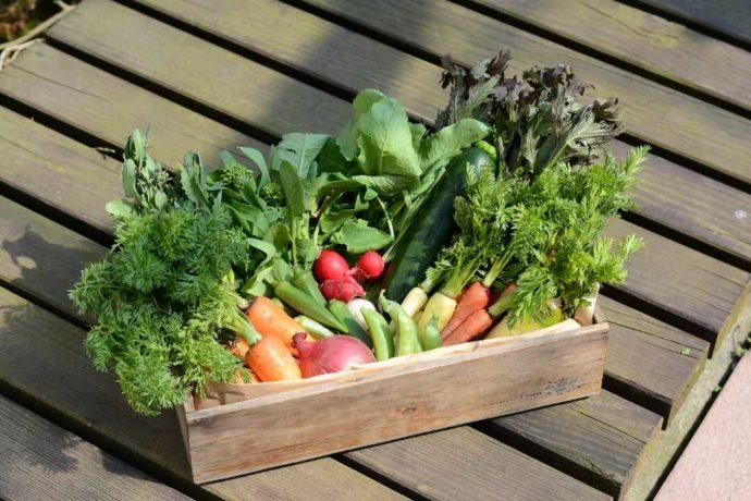 「ぶどうの木ウェディング」の敷地内にある自社農園で採れた新鮮な野菜たち