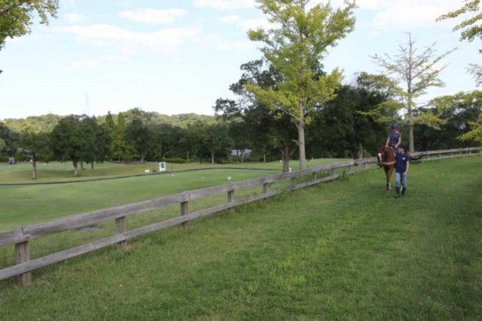 乗馬・散策コース体験