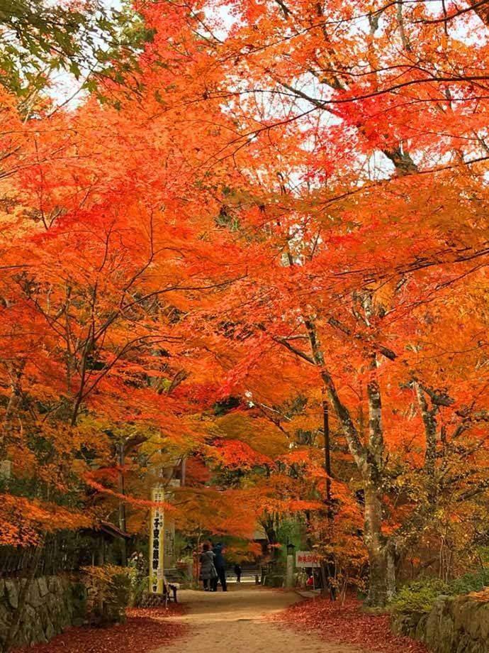 長寿寺のイロハモミジの並木道