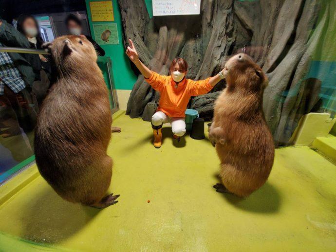 竹島水族館のカピバラのショー