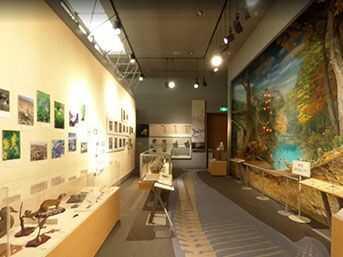 南相馬市博物館にある「自然と生き物たち」の展示