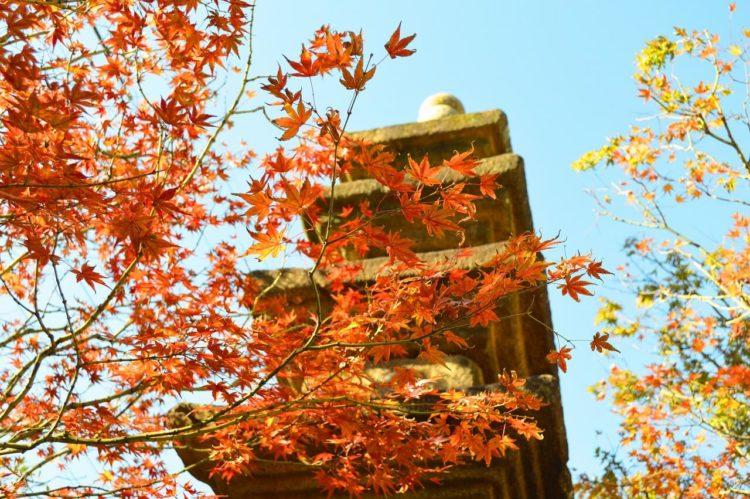 高麗美術館の中庭の石塔・秋