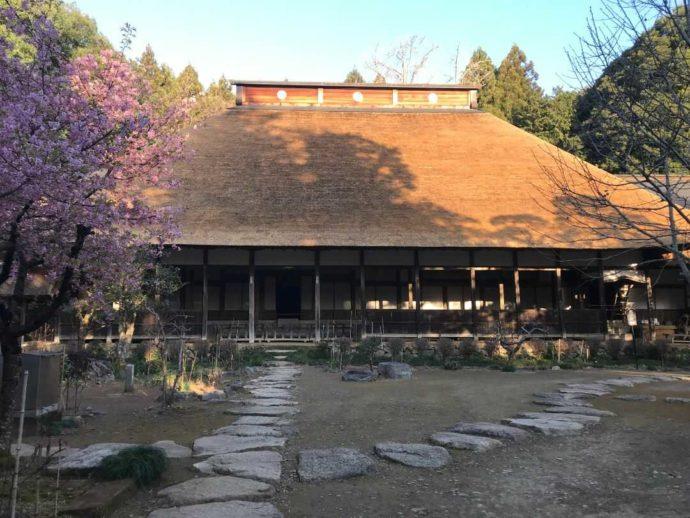 栃木県大田原市にある大雄寺と梅の木
