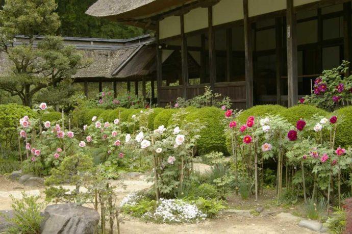 栃木県大田原市にある大雄寺と春の花々