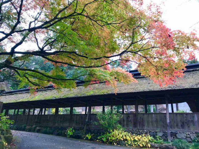 栃木県大田原市にある大雄寺の木々が紅葉し始める様子
