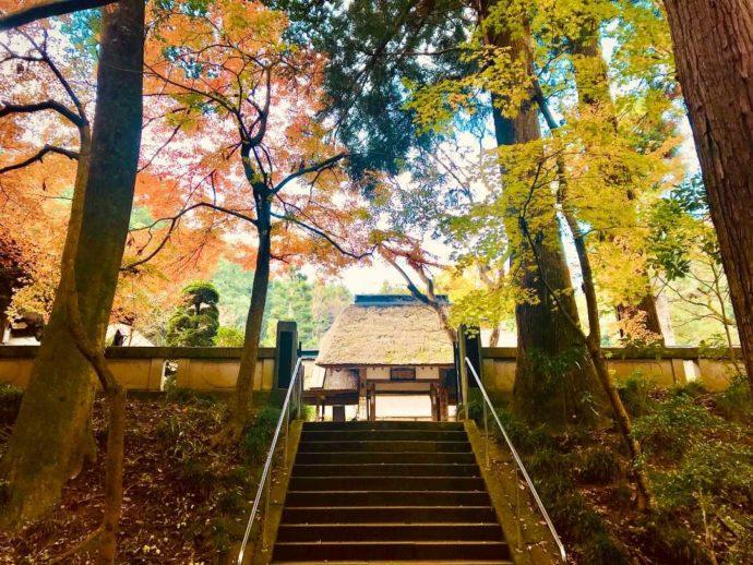 栃木県大田原市にある大雄寺の大伽藍と紅葉