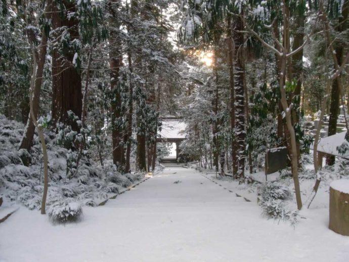 栃木県大田原市にある大雄寺の山道が雪に覆われた様子