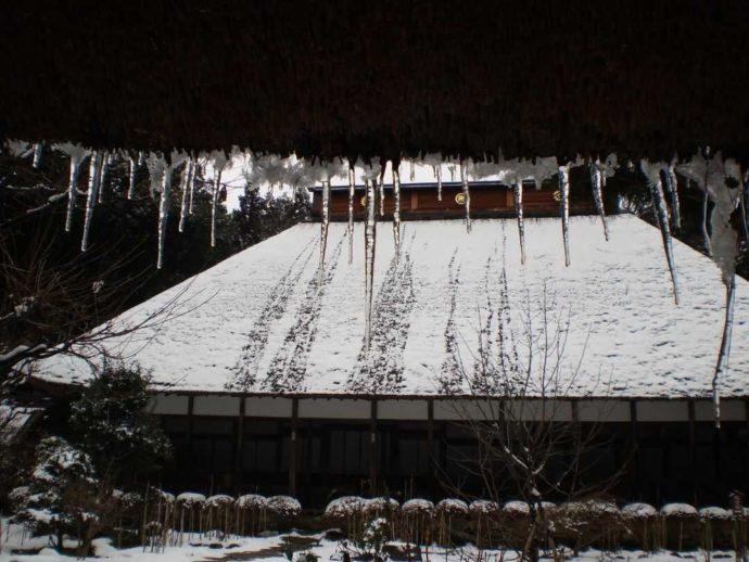 栃木県大田原市にある大雄寺の本堂に雪が積もった様子