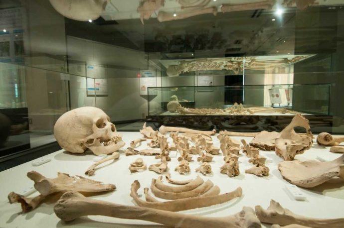 人類学ミュージアムの人骨展示