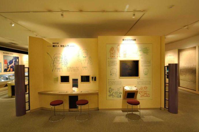 人類学ミュージアムの常設展示室「あなたは縄文人?弥生人?」