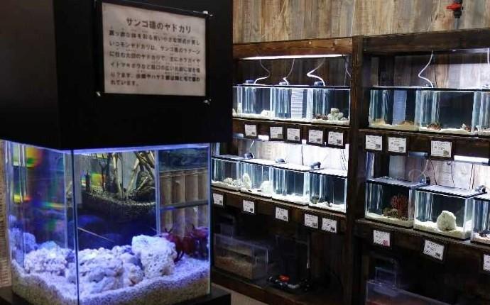 エビとカニの水族館の小さなエビカニの水槽エビとカニの水族館の小さなエビカニの水槽