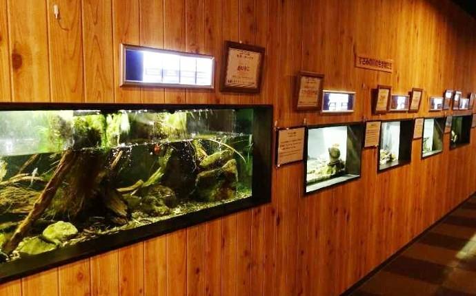 エビとカニの水族館の淡水のエビを飼育する水槽