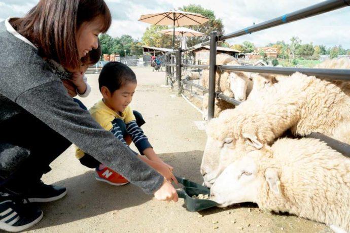 堺・緑のミュージアム ハーベストの丘で羊のえさやり体験に参加中の親子