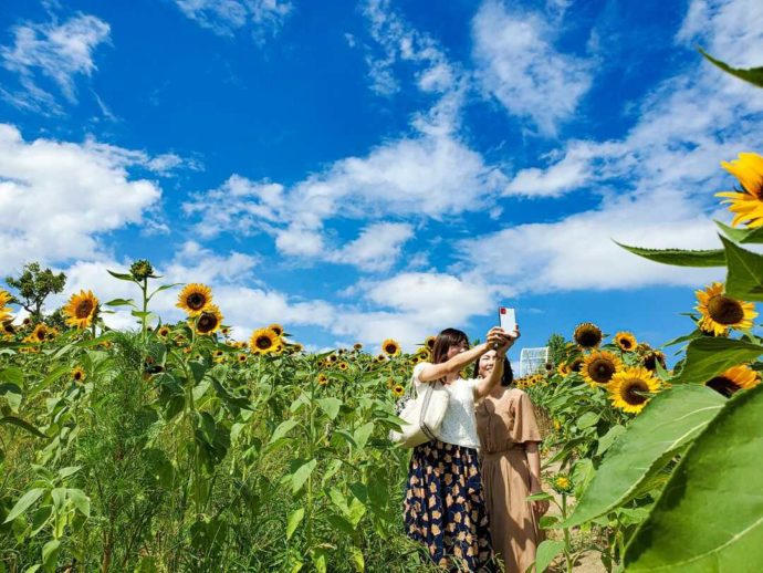 ハーベストの丘でひまわりに囲まれて記念撮影をする女性2人