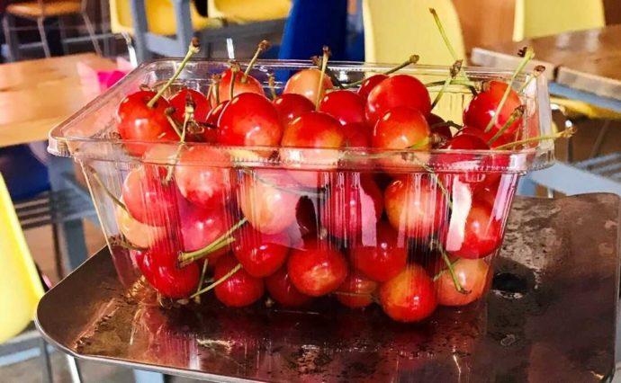 北海道余市町にあるニトリ観光果樹園でとったさくらんぼ500g