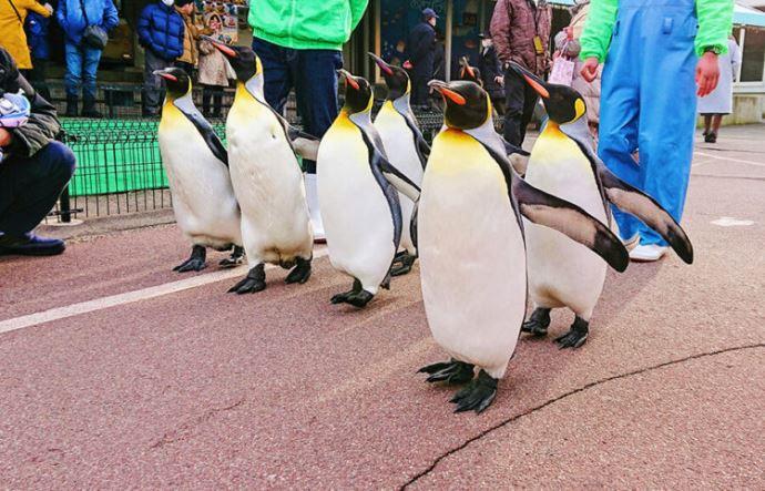 越前松島水族館と周辺を満喫するドライブデートプラン!体験型水族館で仲良し度UP