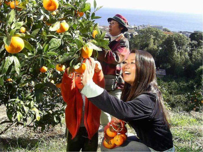 静岡県賀茂郡にある「ふたつぼり」で収穫体験をする人々