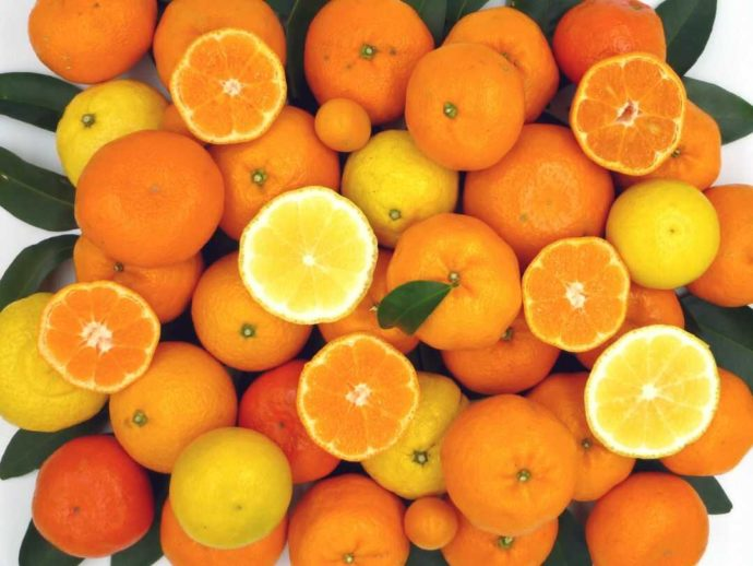 静岡県賀茂郡にある「ふたつぼり」で収穫できる様々な品種のみかんとオレンジ