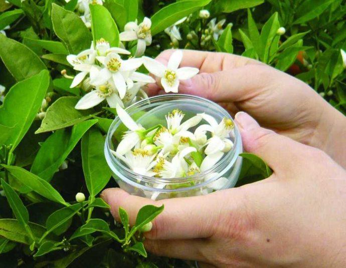 静岡県賀茂郡にある「ふたつぼり」での花摘み体験の様子
