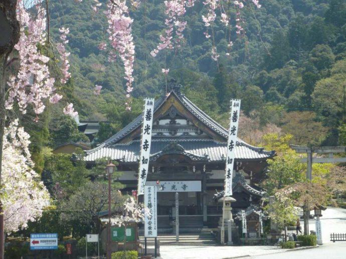 桜の時期の岐阜善光寺の本堂