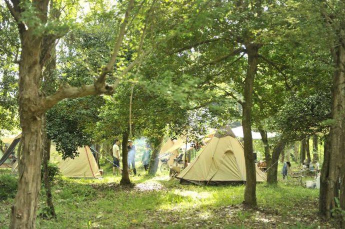 滋賀県米原市にあるキャンプ場・グリーンパーク山東の林間サイト