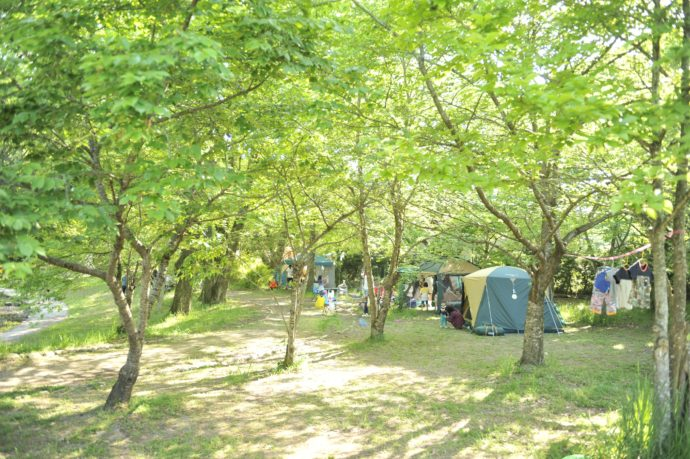 木漏れ日が美しいキャンプ場・グリーンパーク山東の様子