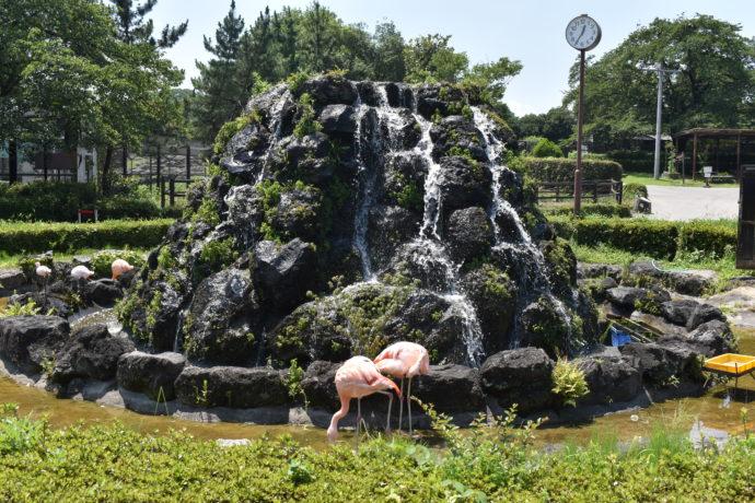 群馬サファリパークの噴水とフラミンゴ