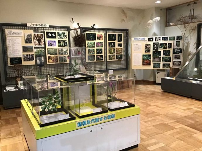 箱根やすらぎの森内「森のふれあい館」に展示されている箱根を代表する植物