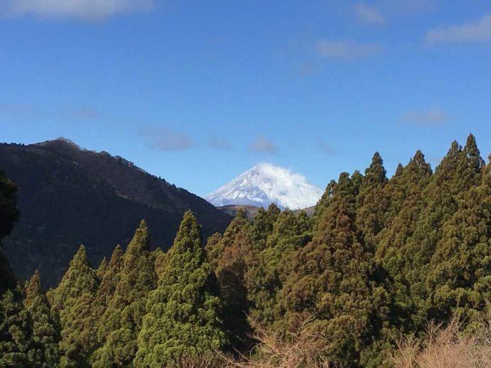 箱根やすらぎの森の敷地内から望むことができる富士山