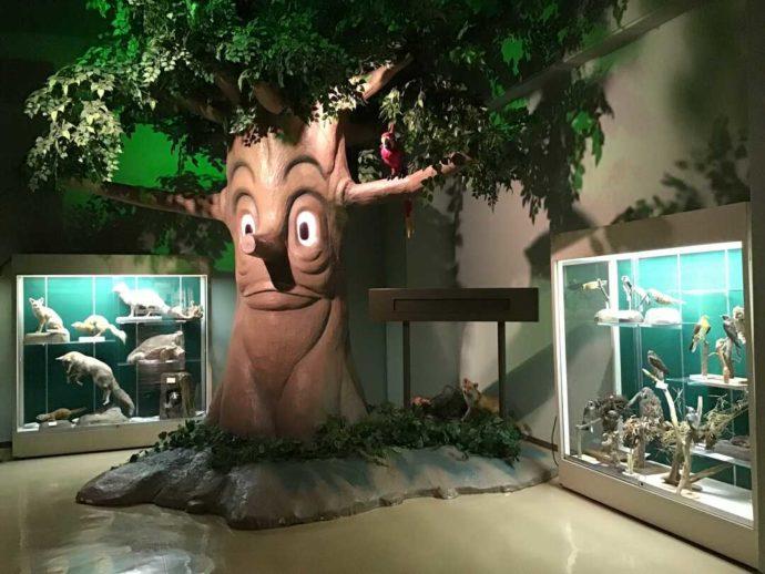 神奈川県箱根町にある「ふれあいの館」の展示コーナー