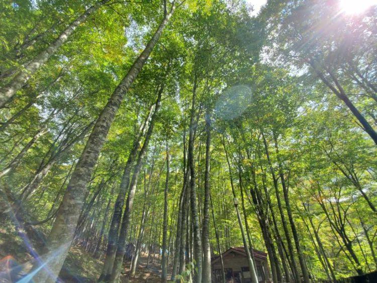 八東ふる里の森の敷地内の森の様子