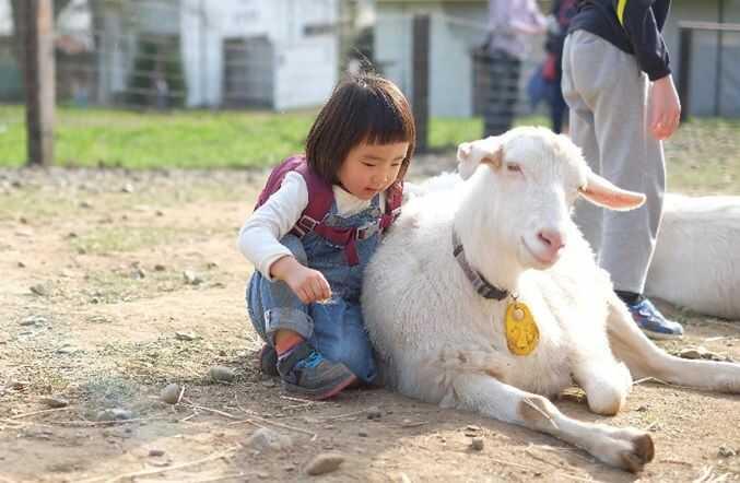 ハイジ牧場のヤギとふれあう女の子