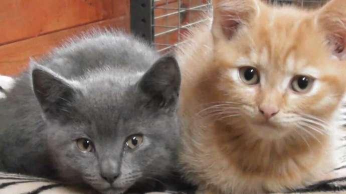 茨城県石岡市にある東筑波ユートピアの猫2匹