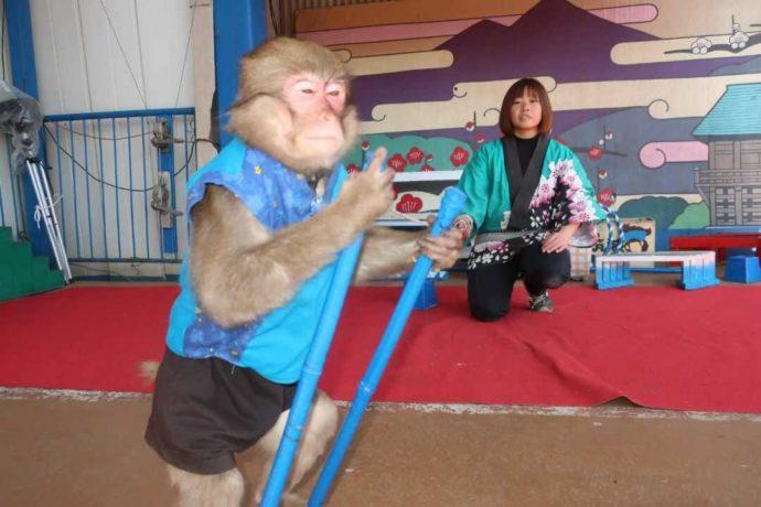 茨城県石岡市にある東筑波ユートピアの猿まわしの様子