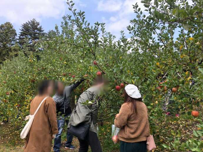 富山県氷見市で婚活支援をするそれいけ!ひみ婚のりんご狩りイベント