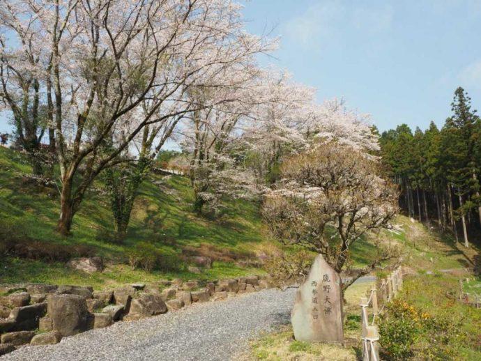 寳光寺 鹿野大佛の西参道の桜